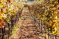 Bosnia Herzegovina- Stolac:  Daorson vinery