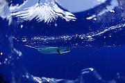Surface plankton net Sargasso Sea, Bermuda | Die Planktonnetze werden von Amy NS Siuda, Ph.D. (Associate Professor, Oceanography<br /> Sea Education Association) in das Wasser gelassen.
