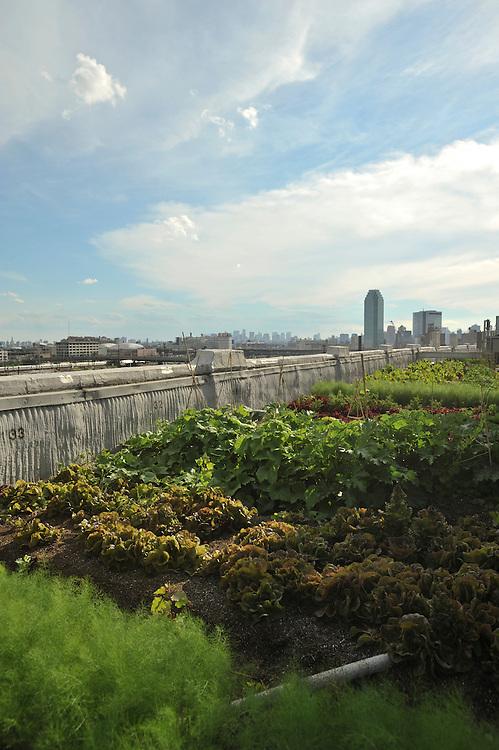 Brooklyn Grange: Additional shots for timeline