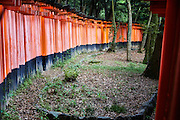 Orange torii gates at Fushimi Inari  shrine. Over 5000 of these gates snake their way up the hill behind the main shrine.