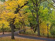 Central Park, east of Turtle Pond.