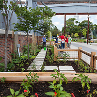 Global Roots community gardens program at the Stop's Green Barn, Wychwood barns, Toronto