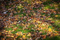 I had a photo session at The Ranche in Fish Creek Park. I arrived early and took advantage of that and explored the area to make some detail images. The fallen leaves on the grassy made interesting patterns,..©2010, Sean Phillips.http://www.RiverwoodPhotography.com