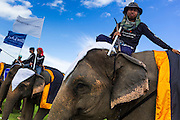"""28 AUGUST 2013 - HUA HIN, PRACHUAP KHIRI KHAN, THAILAND:  Elephants and their mahouts line up at the opening of the King's Cup Elephant Polo Tournament in Hua Hin, Thailand. The tournament's primary sponsor in Anantara Resorts and the tournament is hosted by Anantara Hua Hin. This is the 12th year for the King's Cup Elephant Polo Tournament. The sport of elephant polo started in Nepal in 1982. Proceeds from the King's Cup tournament goes to help rehabilitate elephants rescued from abuse. Each team has three players and three elephants. Matches take place on a pitch (field) 80 meters by 48 meters using standard polo balls. The game is divided into two 7 minute """"chukkas"""" or halves. There are 16 teams in this year's tournament, including one team of transgendered """"ladyboys.""""    PHOTO BY JACK KURTZ"""