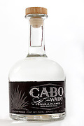 A STUDIO PHOTOSHOOT, done at the VIP area in Cabo Wabo, best drinks, tequila, and casual food favorite for rockers!