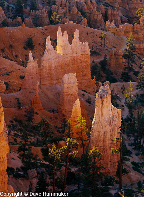 Bryce Canyon National Park  is a national park located in southwestern Utah in the United States. The major feature of the park is Bryce Canyon, which despite its name, is not a canyon but a collection of giant natural amphitheaters along the eastern side of the Paunsaugunt Plateau. Bryce is distinctive due to geological structures called hoodoos, formed by frost weathering and stream erosion of the river and lake bed sedimentary rocks. The red, orange, and white colors of the rocks provide spectacular views for park visitors. Bryce sits at a much higher elevation than nearby Zion National Park. The rim at Bryce varies from 8,000 to 9,000 feet (2,400 to 2,700 m).<br /> The Bryce Canyon area was settled by Mormon pioneers in the 1850s and was named after Ebenezer Bryce, who homesteaded in the area in 1874.[3] The area around Bryce Canyon became a National Monument in 1923 and was designated as a National Park in 1928.
