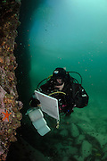 Reasearcher Katie McConnell from the Huinay Scientific Field Station is holdig a clippbord to make records under water. Comau Fjord, Patagonia, Chile|   Forscherin Katie McConnell von der Huinay Forschungsstation kartiert an einer senkrechten Wand in 20 Wassertiefe