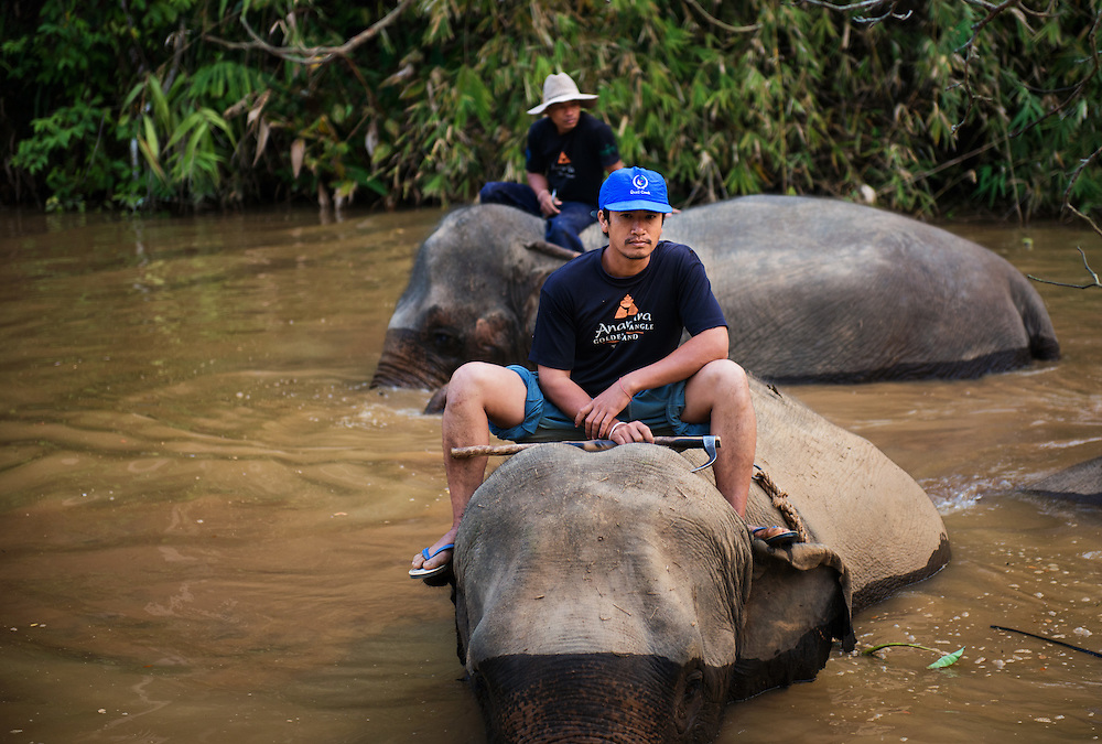 Mahouts and Elephants in the River at  Anantara's Golden Triangle Asian Elephant Camp near the Golden Triangle, Chiang Rai, Thailand.