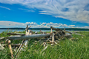 Driftwood at Penouille Beach along the Gulf of St. Lawrence . Appalachians' northeasternmost tip in North America. <br />