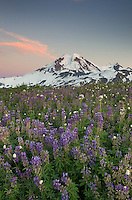 Mount Baker at sunset, seen from wildflower meadows on Skyline Divide, Mount Baker Wilderness Washington
