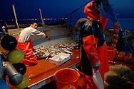 Anzio, Italy 25/06/2008: battuta di pesca con il peschereccio Stella d'Argento. Stefano è il capitano, lavora in mare da quando aveva 12 anni, pochi mesi fà la sua barca è affondata e due marinai nordafricani sono affogati. Sul peschereccio ora lavorano Saddek dall'Algeria, maestro di scienze in Italia da 8 anni, Mimmo dall'Egitto, in Italia da 3 anni e Mauro di Anzio che lavora in mare da quando aveva 15 anni e a lungo ha pescato sui grandi pescherecci nel Mediterraneo.