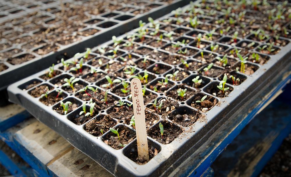 Seedlings Brooklyn Grange