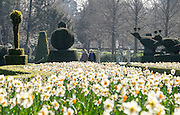 © Licensed to London News Pictures. 07/04/2015. Maidenhead, UK. A couple walk through the daffodils in the Long Garden. People enjoy the warm and sunny weather at Cliveden House in Maidenhead Buckinghamshire today 7th April 2015. Photo credit : Stephen Simpson/LNP