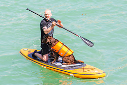 © Licensed to London News Pictures. 01/06/2019. Brighton, UK. A man takes his dog paddle boarding in Brighton and Hove as hot and sunny weather is hitting the seaside resort. Photo credit: Hugo Michiels/LNP