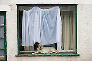 Pet dog in house window.