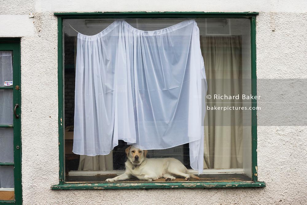 Pet dog in house window.