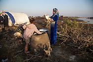 16/12/2016-Chbaish,Iraq- Kafia 16, and his sister, are baking flat bread every morning.