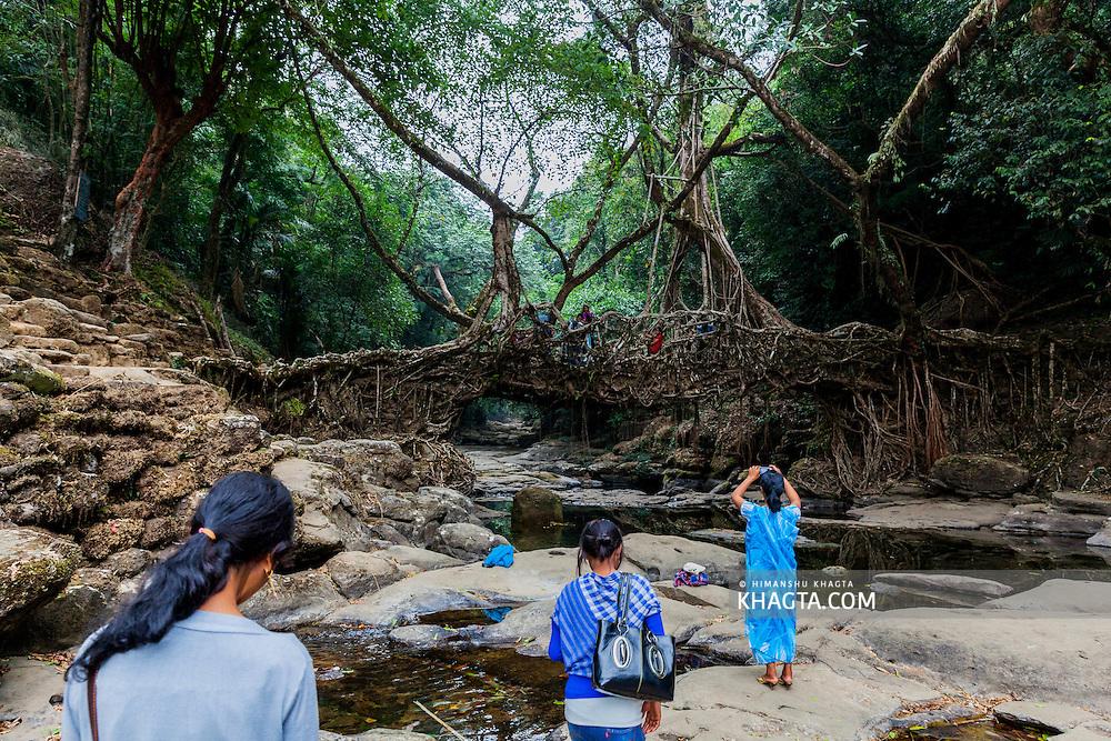Living root bridges at Riwai near Mawlennong village of Meghalaya.