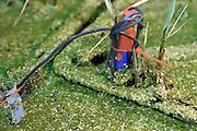 Nederland, Wageningen, 3-11-2011Opwekken van electriciteit door planten bij de Wageningen university. Deze onderzoeksopstelling bij Plant-e geeft 500 milivolt, 0,5 volt, per bak, genoeg om een led lampje te laten branden.Foto: Flip Franssen/Hollandse Hoogte