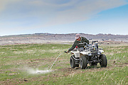 Using ATVs, workers in Badlands National Park dust each Prairie dog burrow in a colony for fleas. Fleas can carry sylvatic plague, one of the biggest threats to endangered Black-footed ferrets, which also use the burrows.