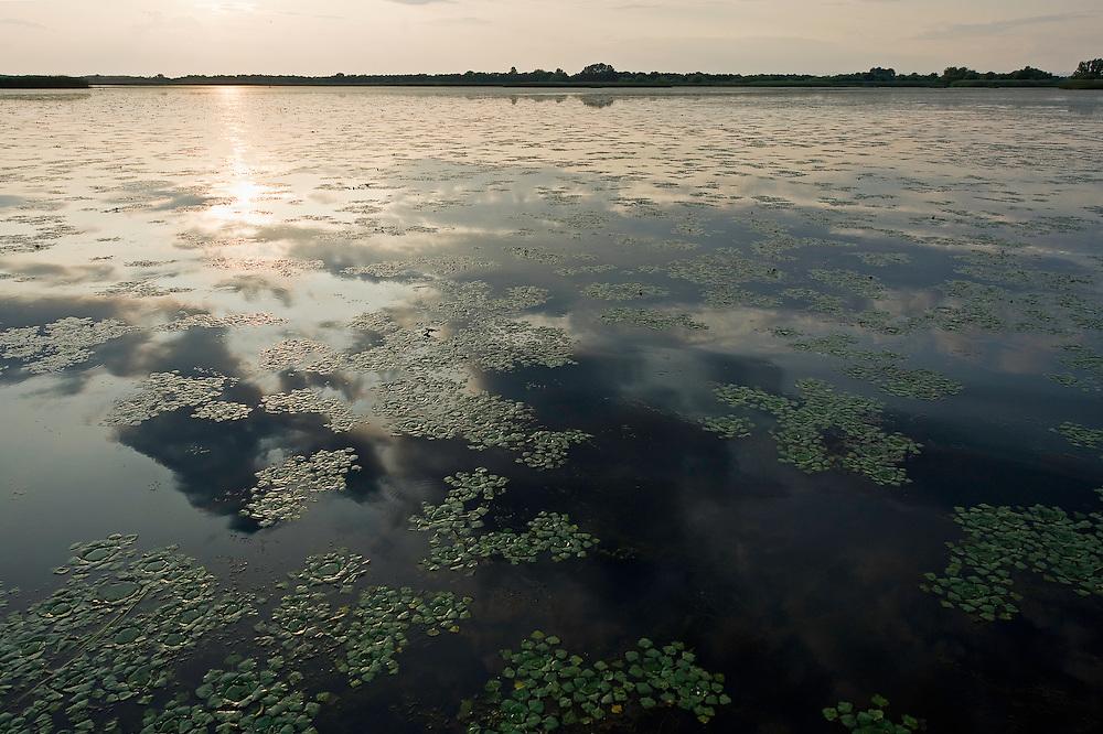 Tisza lake at sunset with Water caltrop (trapa natan) field in Hortobagy National Park, Hungary