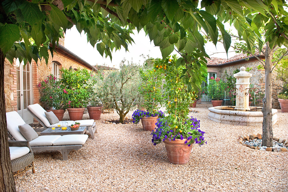 Courtyard garden with sun loungers, gravel, olive tree, fountain and orange (Citrus) trees with pansies in containers at Borgo Santo Pietro, Tuscany, Italy<br /> <br /> photography &copy; Andrea Jones/courtesy Borgo Santo Pietro