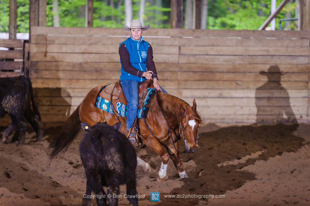 May 21, 2017 - Minshall Farm Cutting 4, held at Minshall Farms, Hillsburgh Ontario. The event was put on by the Ontario Cutting Horse Association. Riding in the 5,000 Novice Horse Class is Raegan Zingbeil on Maxies Cat owned by the rider.