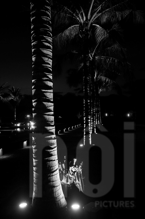 Line of palm trees by night in Nha Trang, Vietnam, Asia. Lights from the ground gives nice shape to trunks