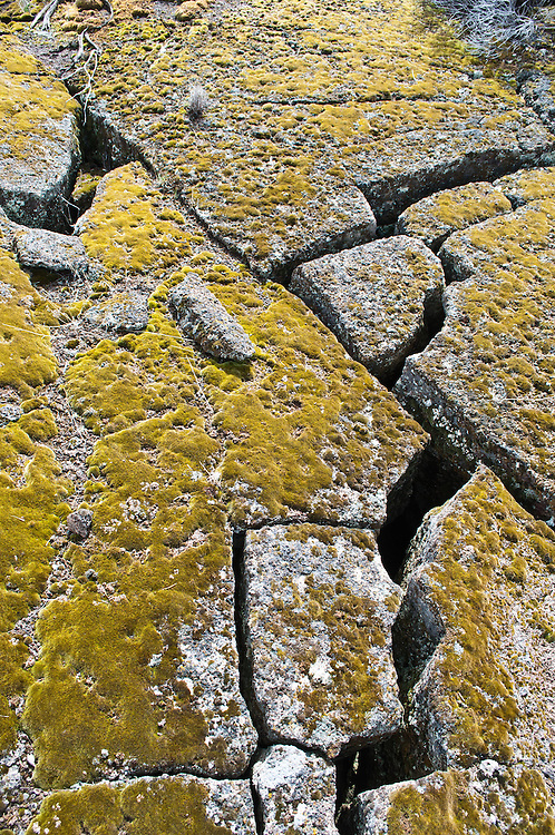 Cracked basalt covered in moss at Diamond Craters Outstanding Natural Area, Diamond, Oregon