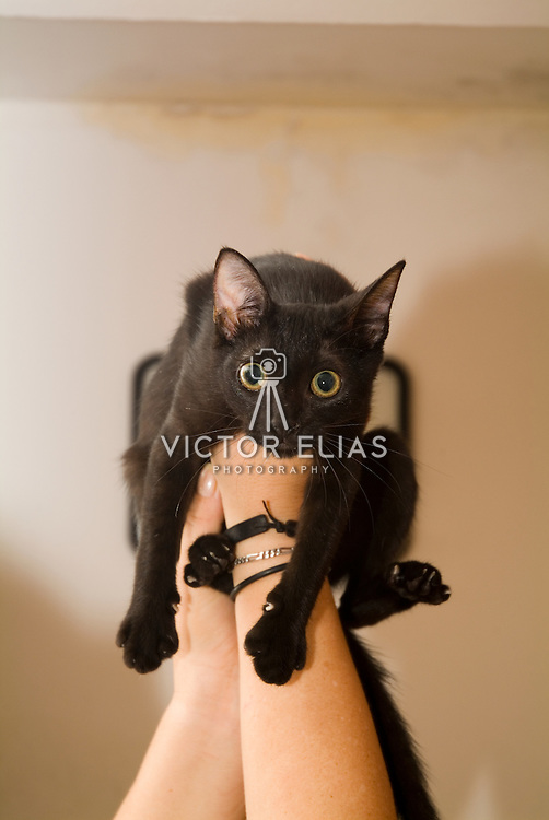 Black cat on hands with crazy look..Cancun, Mexico.
