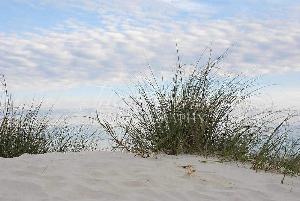 Wild grass grows on the dunes before a cloudy sky at the beach in St. Augustine Beach, Florida.