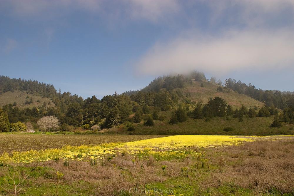Wildflowers by a farmer's field north of Santa Cruz, California