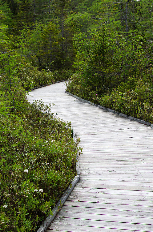 A weathered wooden boardwalk curves out of sight in the Eagle Hill Bog botanical garden on Campobello Island, Canada.