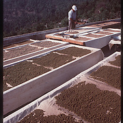 Photo by David Stephenson.  Tibetan herbal medicine dries on racks in Dharamsala, India, in 11/91.