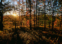 The sun breaks through the trees early in the morning at Canaan Valley State Park, circa 2001. The park located in the Allegheny Mountains of Tucker County, West Virginia, offers scenic beauty and plenty of outdoor recreation including hiking, biking, and cross country skiing..
