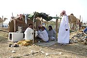 Al Ain, United Arab Emirates (UAE).February 2nd 2009..A camel's market