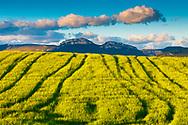 Loquiz mountain range and cereal crop. Tierra Estella, Navarre, Spain, Europe.