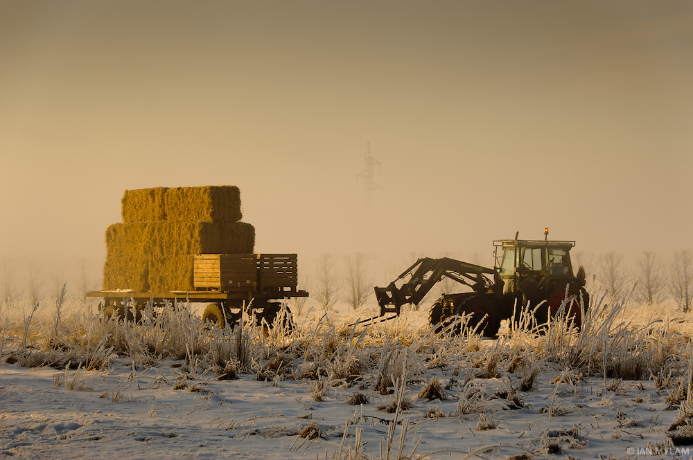 Farming in Winter - Island of Funen, South Denmark