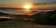 California, Petaluma, sunrise, foggy, valley, golden light.