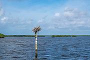 Everglades National Park, Florida, United States