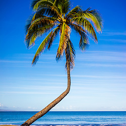 Bent curved palm tree at Kamaole Beach Park with Maalaea Bay in Wailiea Kihei Hawaii in the Hawaiian Islands. Copyright ⓒ 2019 Paul Velgos with All Rights Reserved.