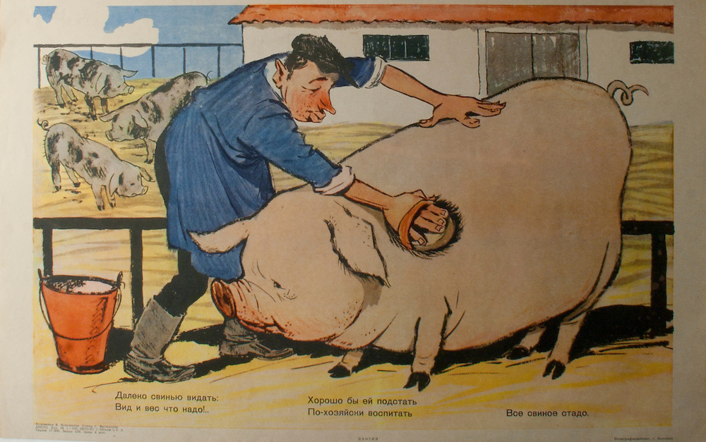 L3Loan98v11<br /> <br /> Artist: V. Konovalov, Verse: S. Vasiliev<br /> <br /> The verse reads:<br /> <br /> This healthy fatty pig is taken good care.<br /> Where is the keeper who will make the rest of the herd look that fair?<br /> <br /> The peasant on a collective farm cares for the show pig, while the rest of the animals are neglected--unwashed and unfed.