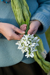 Tying wire around picked snowdrops