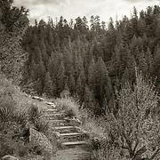 Steps winding around a corner of the Island Trail in Walnut Creek