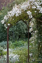 Rosa mulliganii growing over the pergola in the White Garden at Sissinghurst Castle