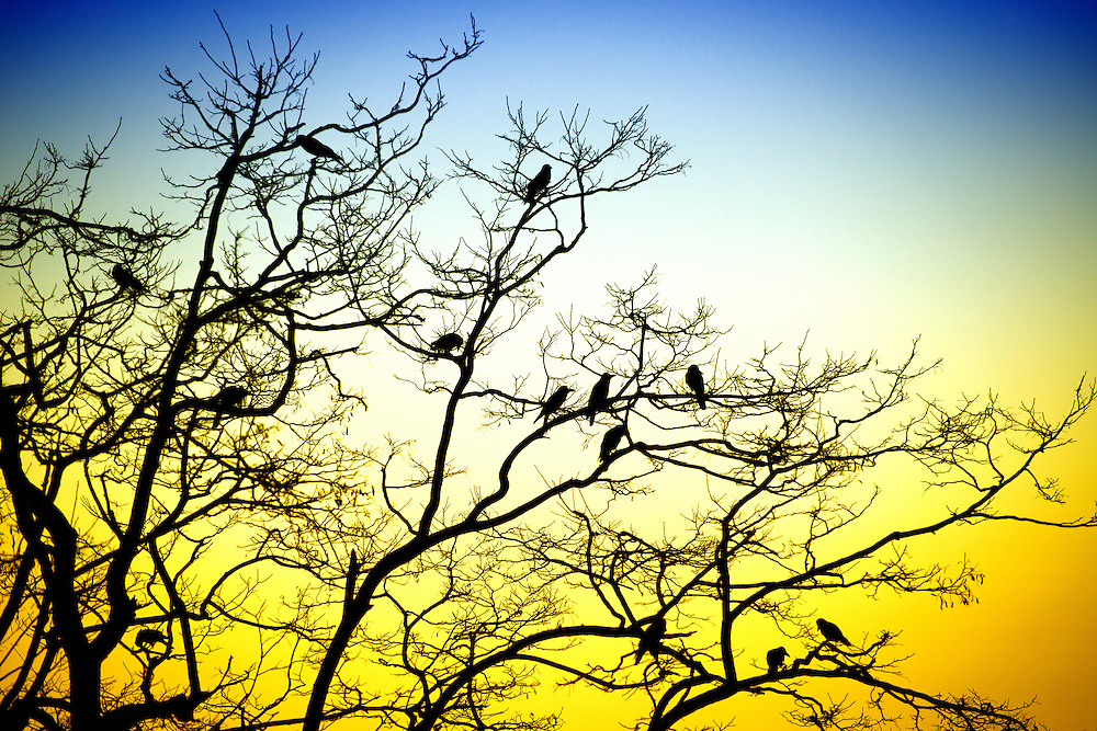 Sihouette of Birds on Tree Branches