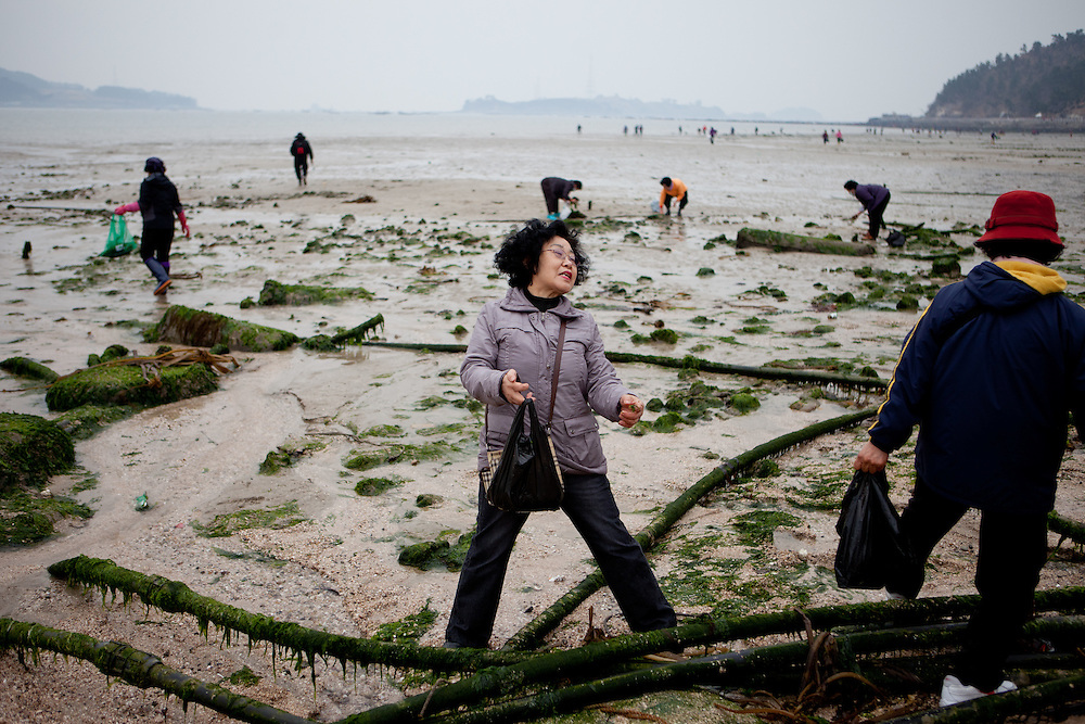 "Visitors collecting mussels during low tide at Hoedong shore (Jindo Island). Jindo is the 3rd biggest island in South Korea located in the South-West end of the country and famous for the ""Mysterious Sea Route"" or ""Moses Miracle"" which is happening during full moon in spring."