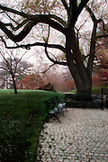New York Botanical Garden, Bronx, NY (US).