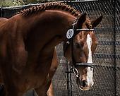 Horse No 38