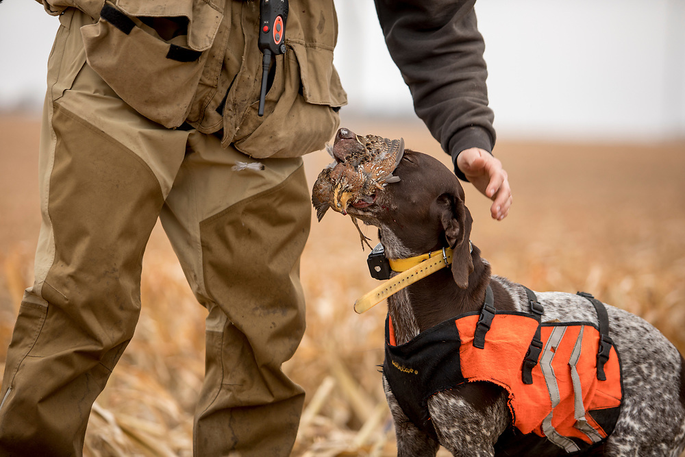 Upland hunter with his German Shorthaired Pointer.